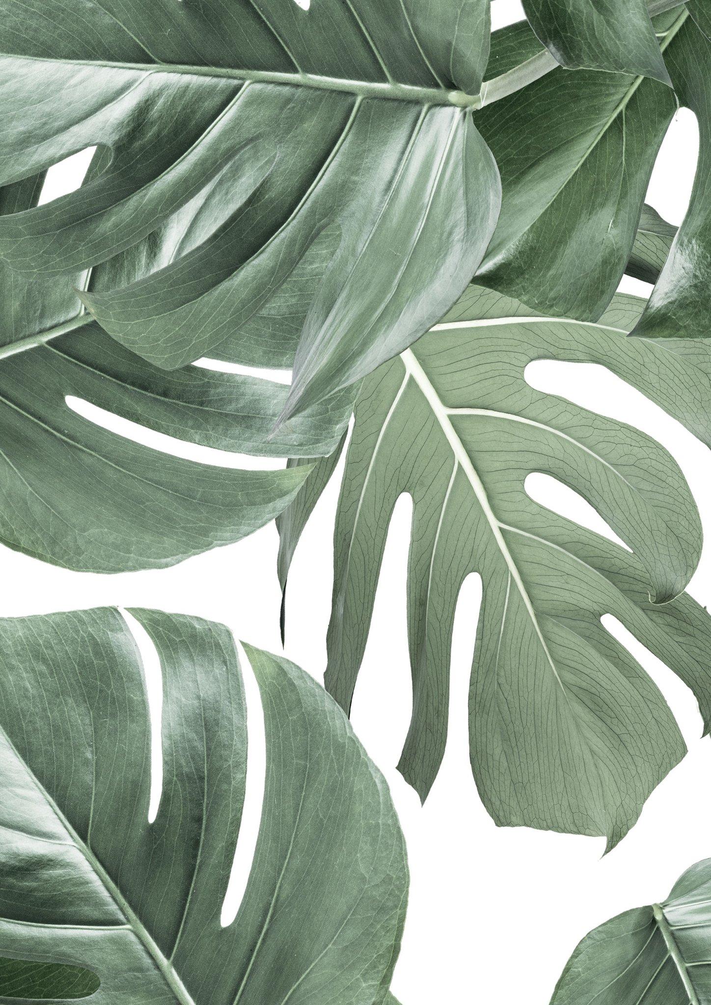 Botanical Wallpaper Monstera White by KEK Amsterdam BURKE DECOR 1448x2048