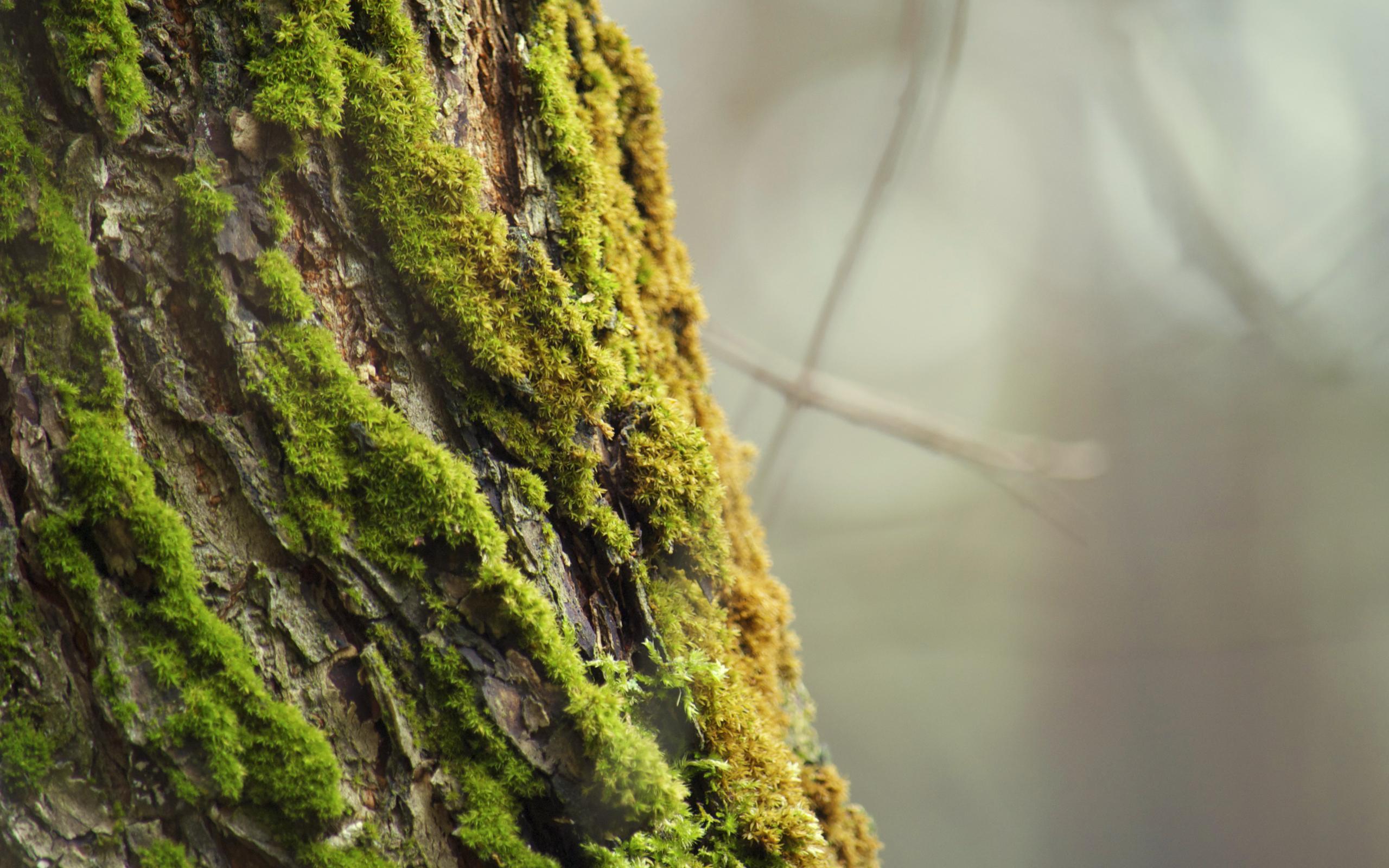 moss on the bark wallpaper   ForWallpapercom 2560x1600