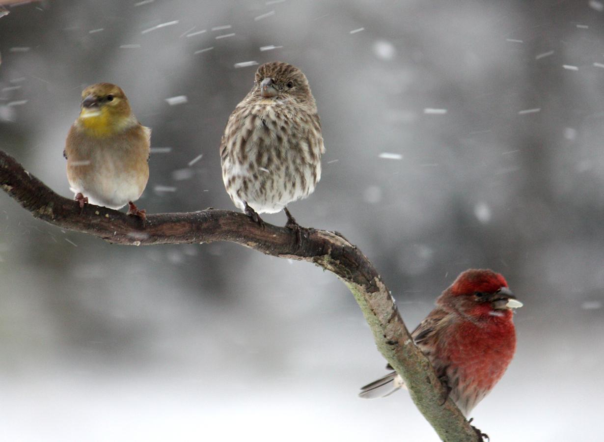 bird in winter Snow beautiful birdsfreezingjpg 1230x900