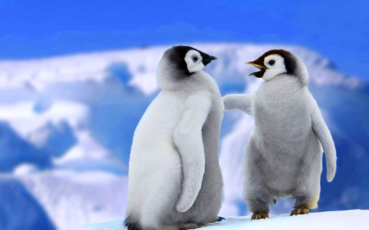 Funny Penguin Download wallpaper Gallery 1280x800