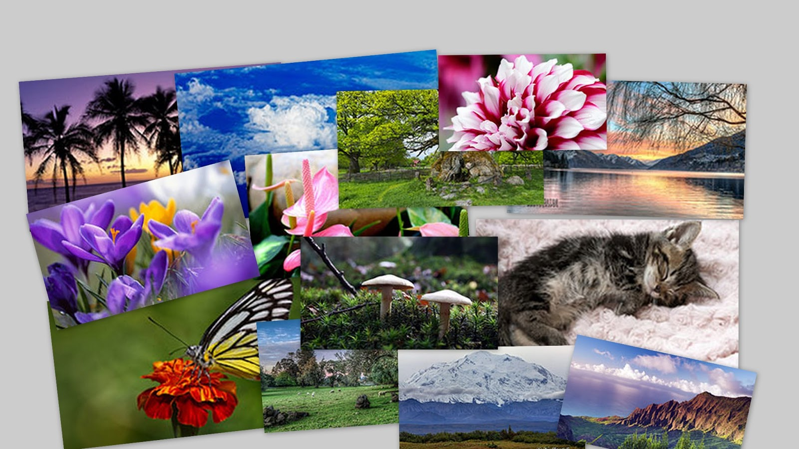 Free Live Wallpapers For Windows 8: Windows 8.1 Live Wallpaper