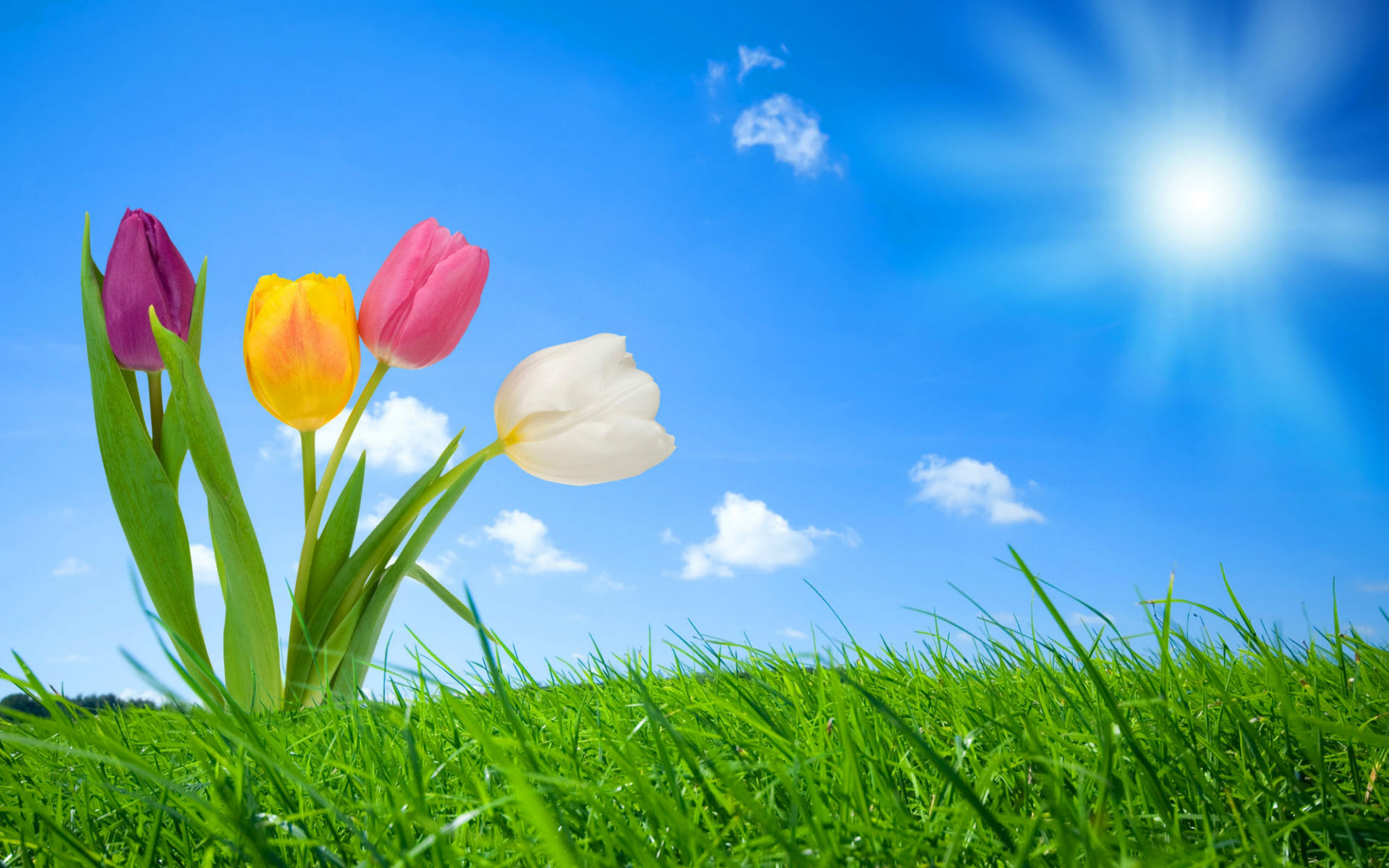 Spring Background Pictures for Desktop wallpaper Spring Background 1920x1200