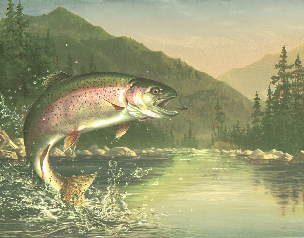 Fly Fishing Check Out That Rainbow Trout After The Fly Wallpaper 1000x782