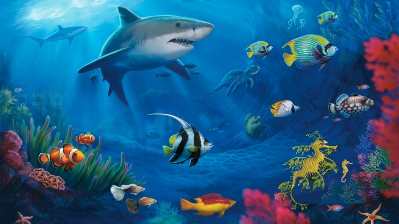 4983 Category Animals Hd Wallpapers Subcategory Fish Hd Wallpapers 800x450
