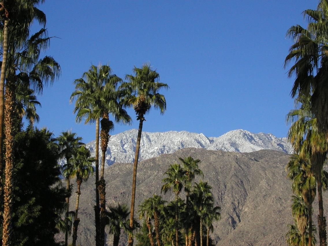 Palm Springs Wallpaper Wallpapersafari