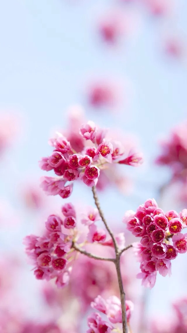 Pink flowers iPhone 5s Wallpaper Download iPhone Wallpapers iPad 640x1136