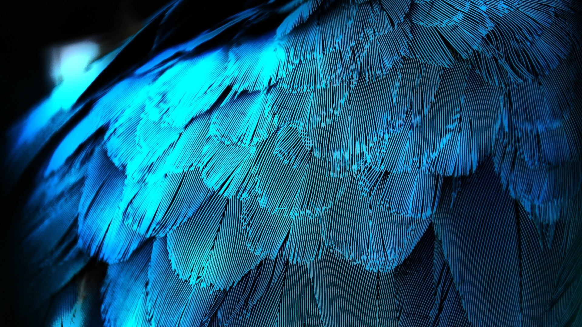 1920x1080 Electric Blue Feathers desktop PC and Mac wallpaper 1920x1080