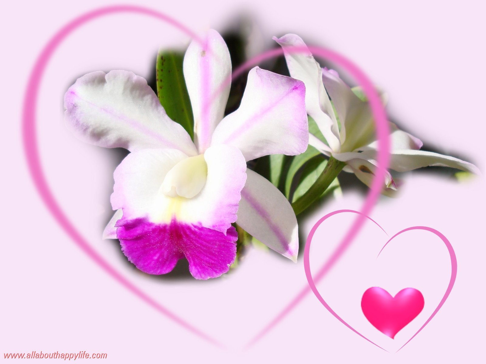 Love wallpaper with sweet roses and orchids with Valentine heart 1600x1200
