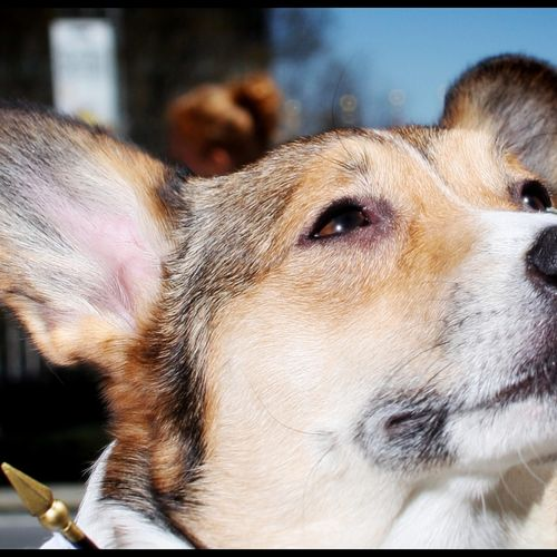 Proud Dog Screensaver For Amazon Kindle 3 500x500