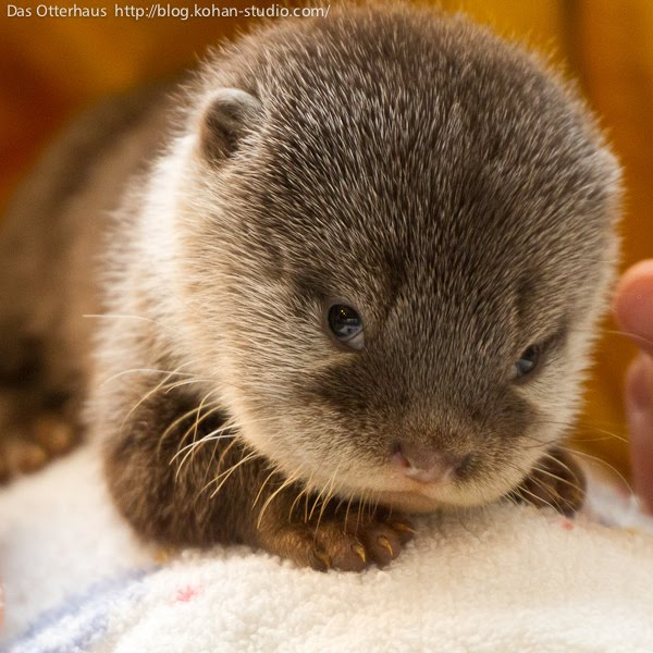 cute baby otter baby otter cute baby animals baby animal pictures 600x600