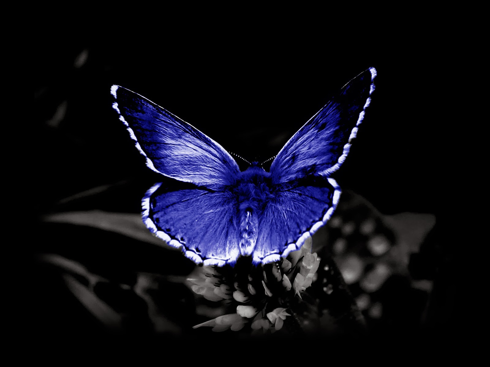 wallpapers Butterfly Desktop Backgrounds 1600x1200