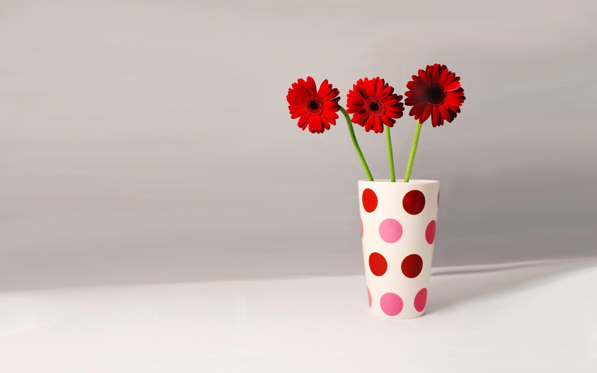 Gerberas Petals Red Cup Flowers Vase