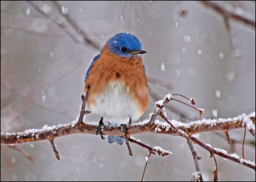 bird in winter wallpaper   ForWallpapercom 847x605