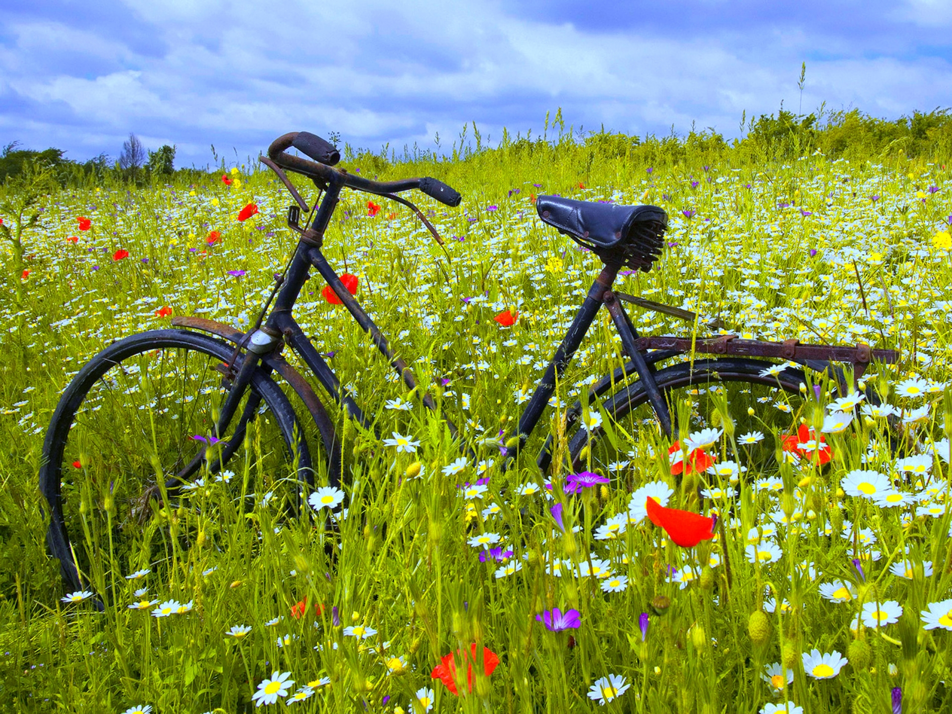 Flower And Bicycle Wallpaper Desktop Wallpaper WallpaperLepi 1920x1440