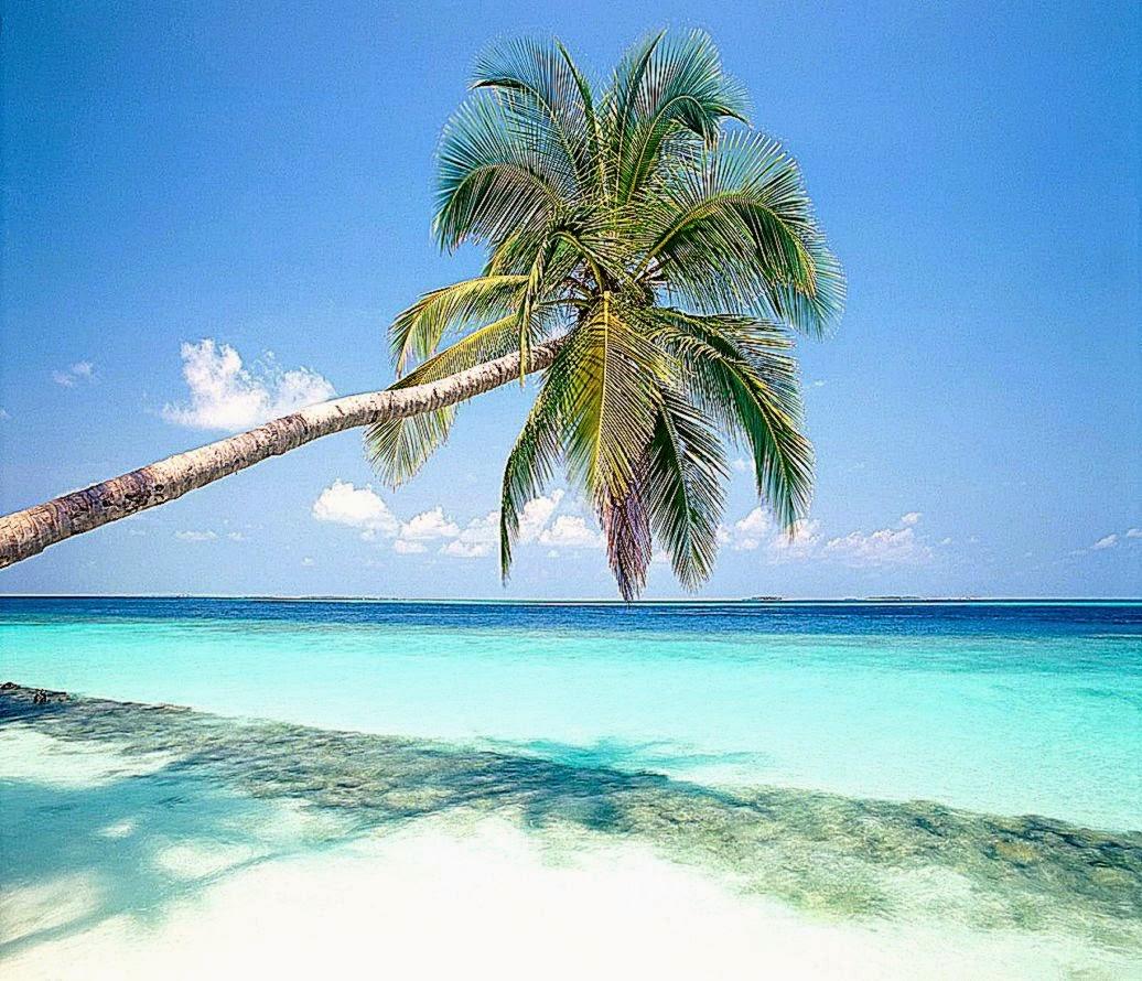Image Gallery nature screensaver tropical islands 1036x890