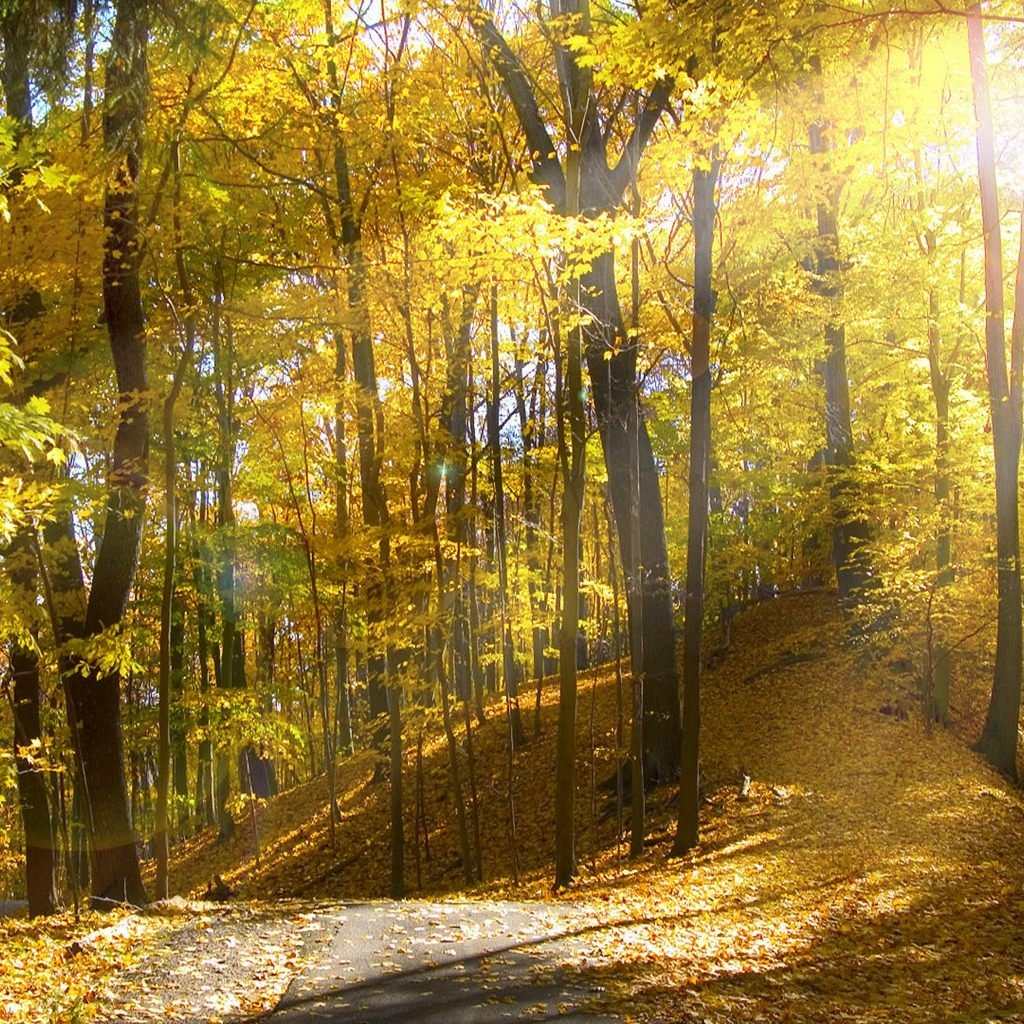 Sunny Autumn Forest download wallpapers for iPad 1024x1024