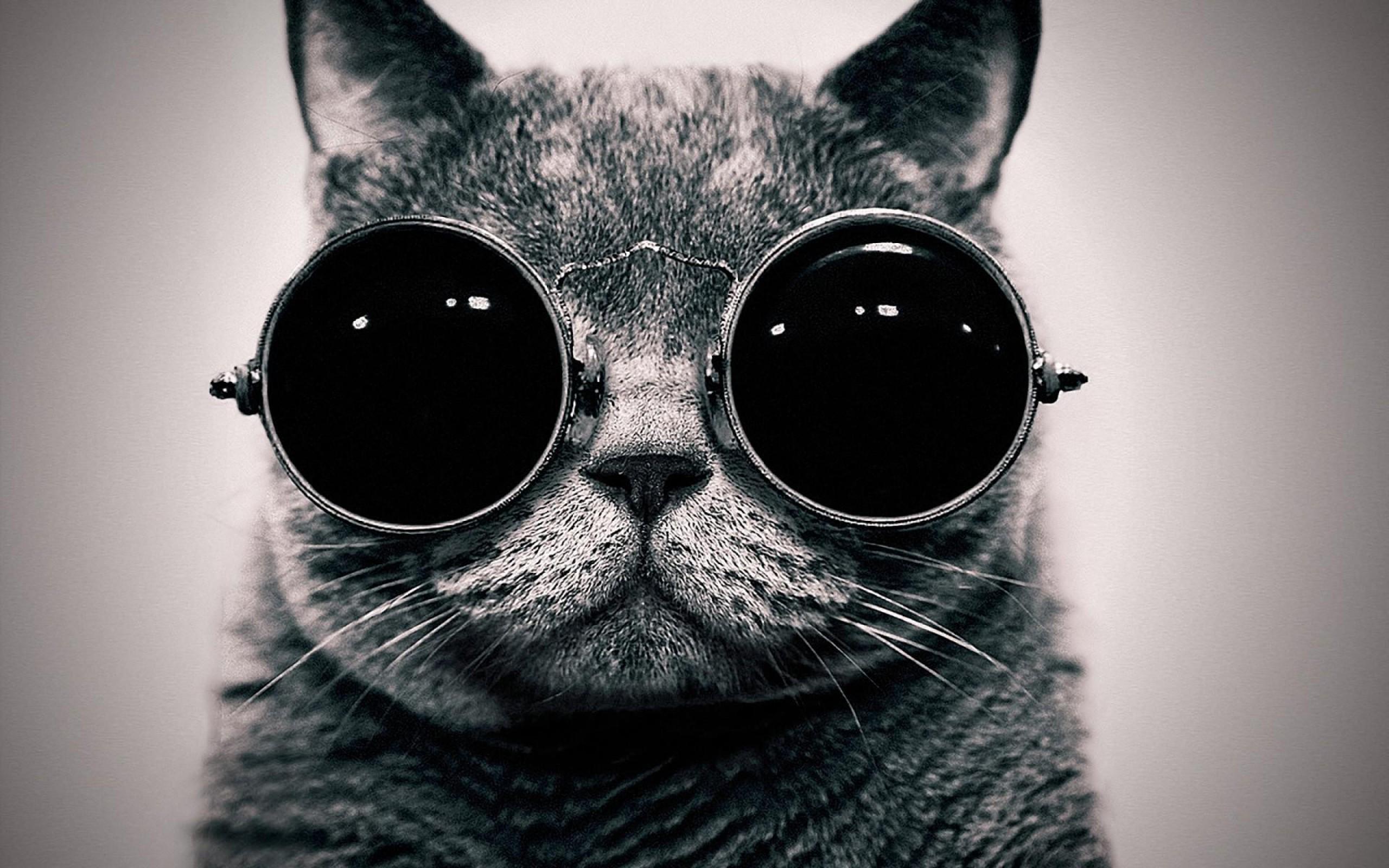 Cute Cat With Sunglasses HD Wallpaper 2560x1600