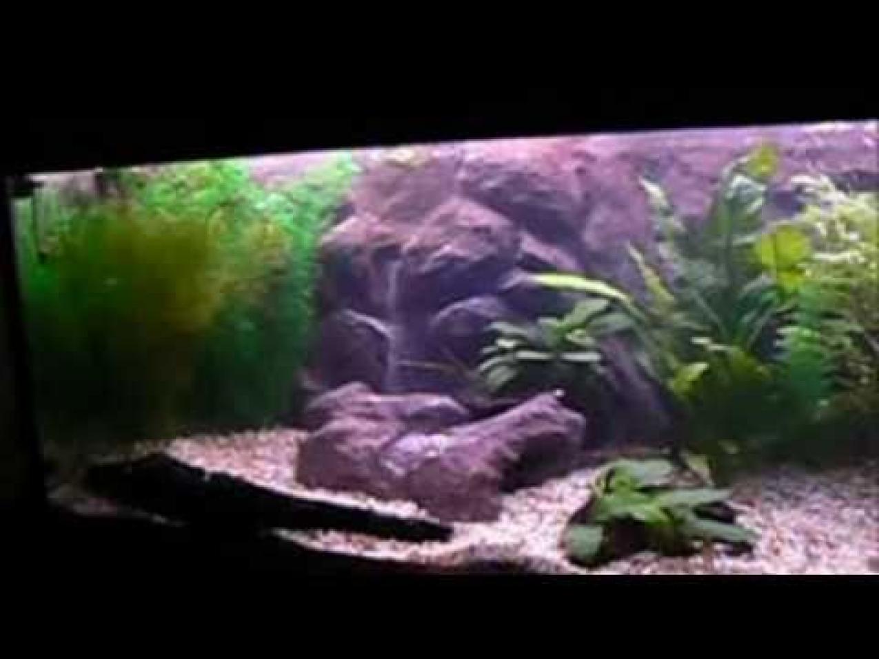 Aquarium D Backgrounds Download HD Wallpapers 1275x957