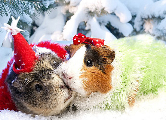 Christmas Animals Wallpaper 552x400