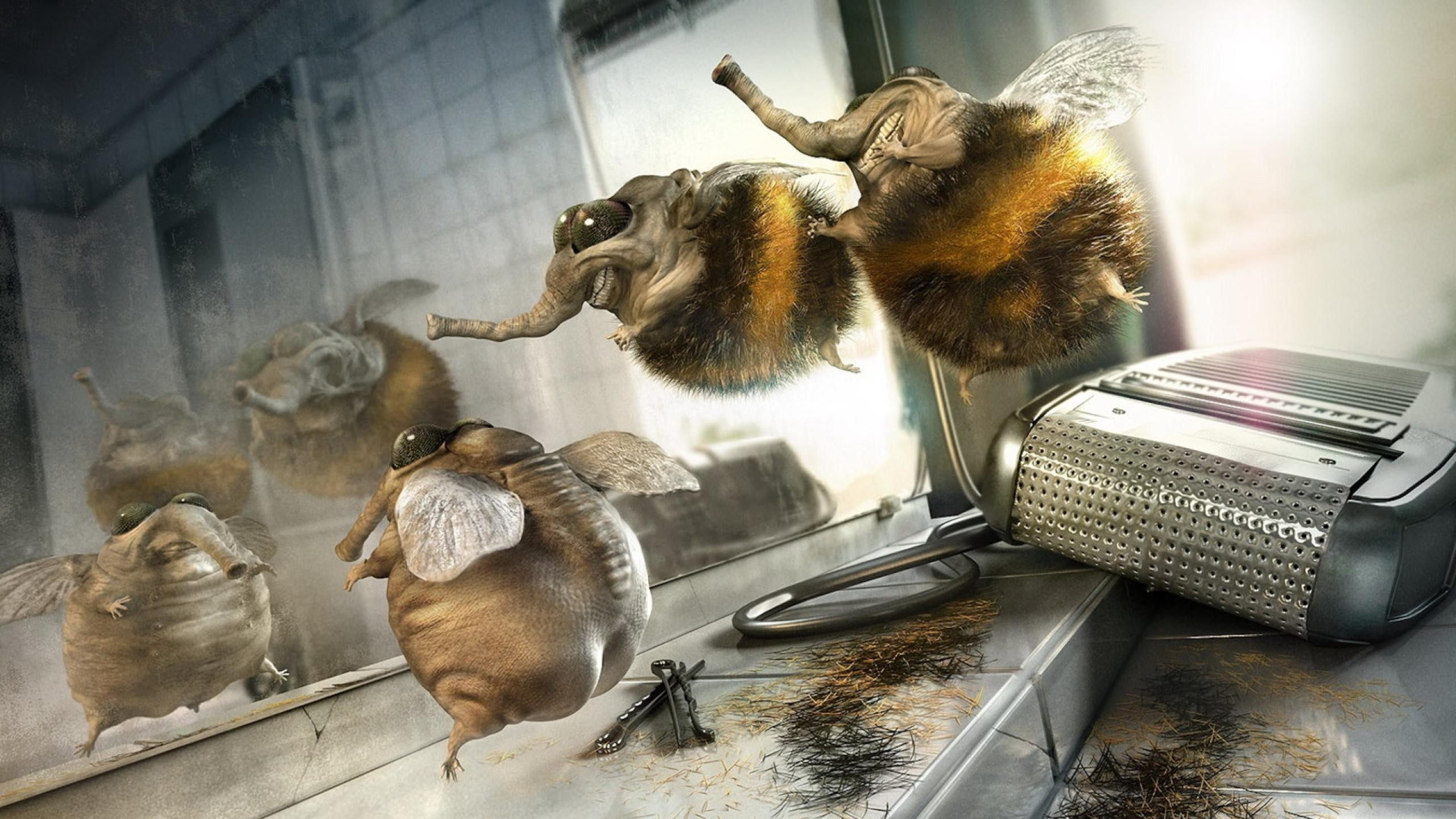 Funny Animal Wallpapers Download HD Wallpapers 2560x1440