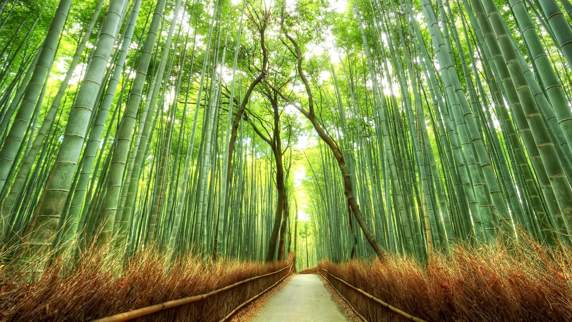 Chinese Bedroom Bamboo Forest Japan Computer Wallpaper Wallpapersafari