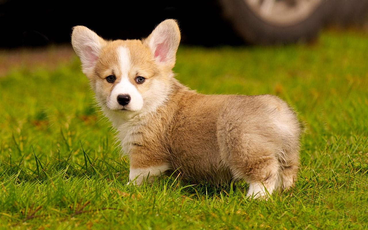 Most Pretty Small Dogs