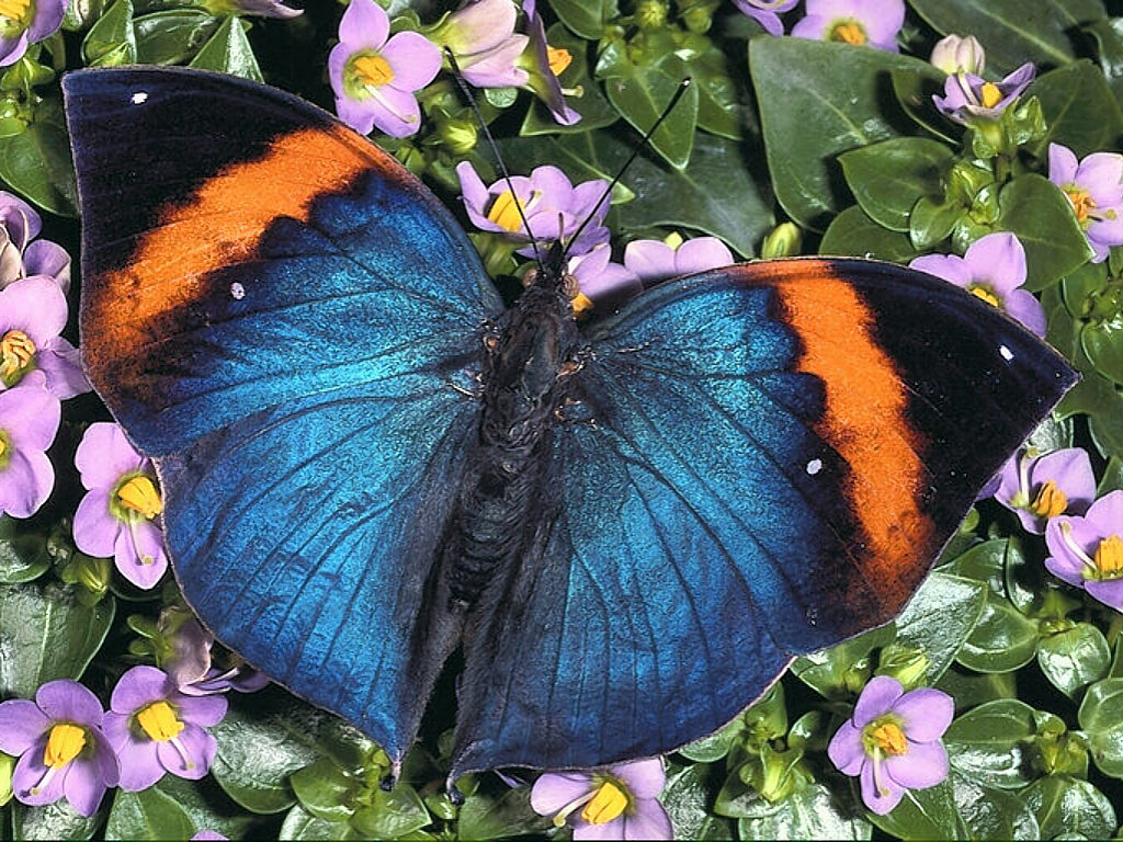 wallpaper about flowers and a butterfly and a blue butterfly is 1024x768