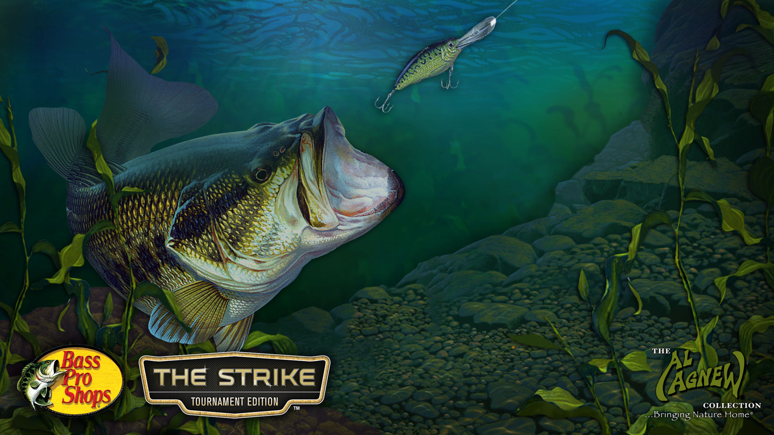 Largemouth Bass Backgrounds 2560x1440
