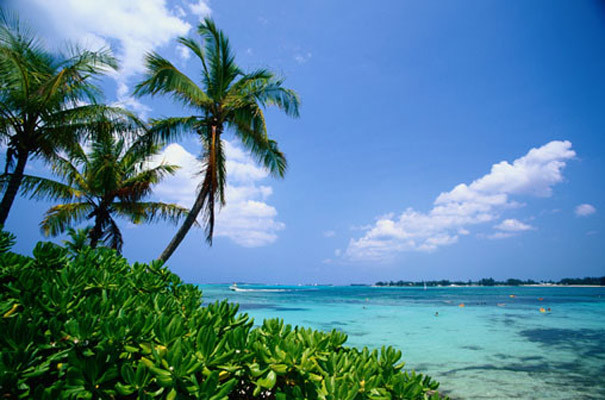 Ocean Palm Trees Mural   Tropical   Wallpaper   other metro   by 605x400