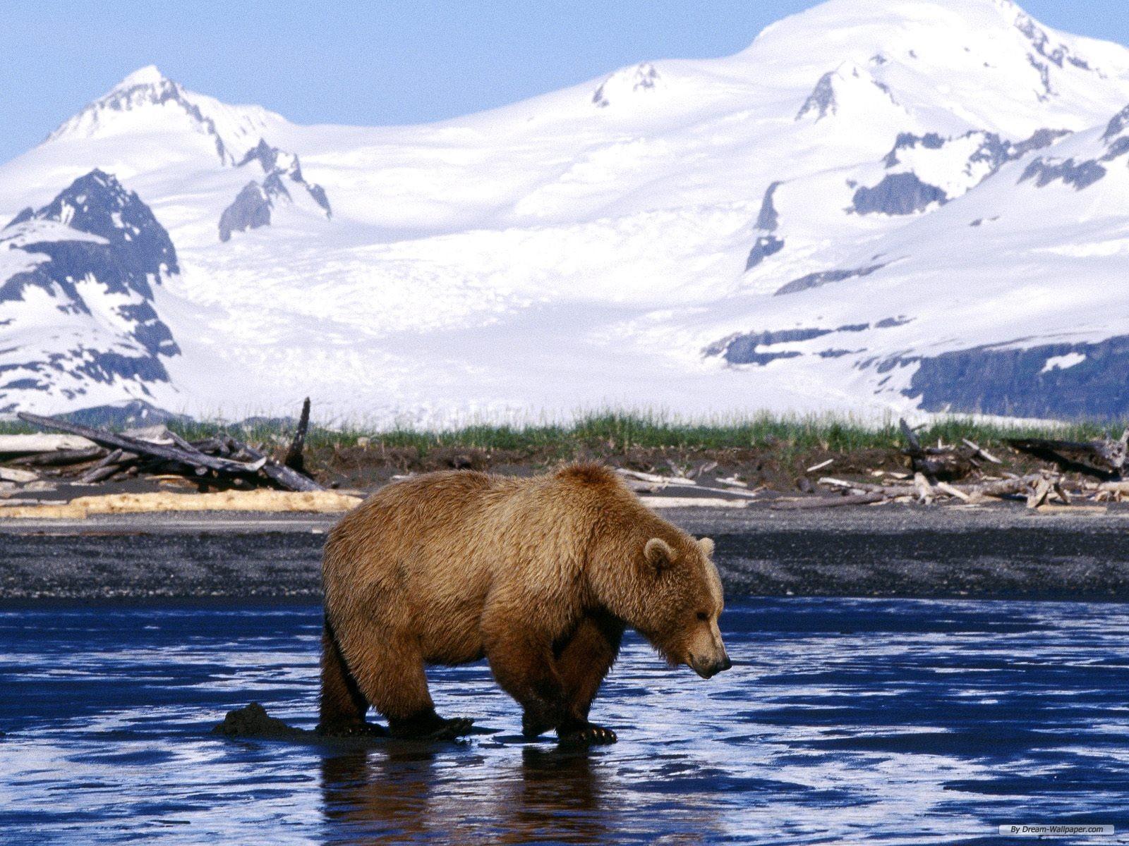 Wallpaper - Free Nature wallpaper - Webshots Daily Photo wallpaper ...