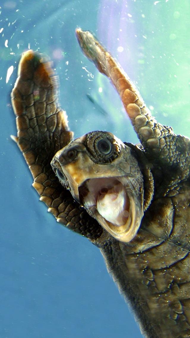 46 Sea Turtle Wallpaper For Iphone On Wallpapersafari
