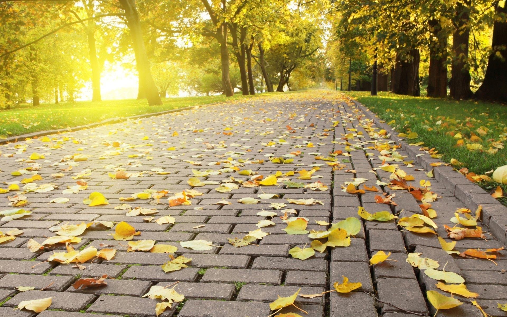 Hd wallpaper wide - Hd Wallpapers Nature Landscape Autumn Widescreen Hd Wallpapers