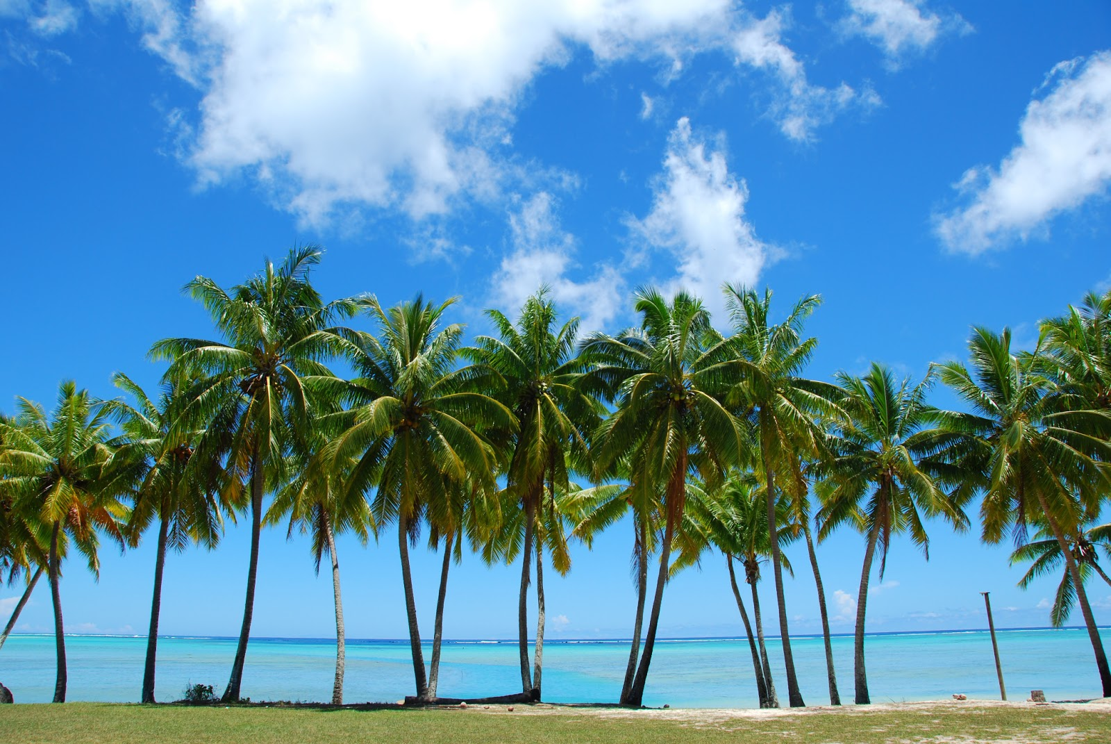 HD Wallpapers palm tree wallpapers hd 1600x1071