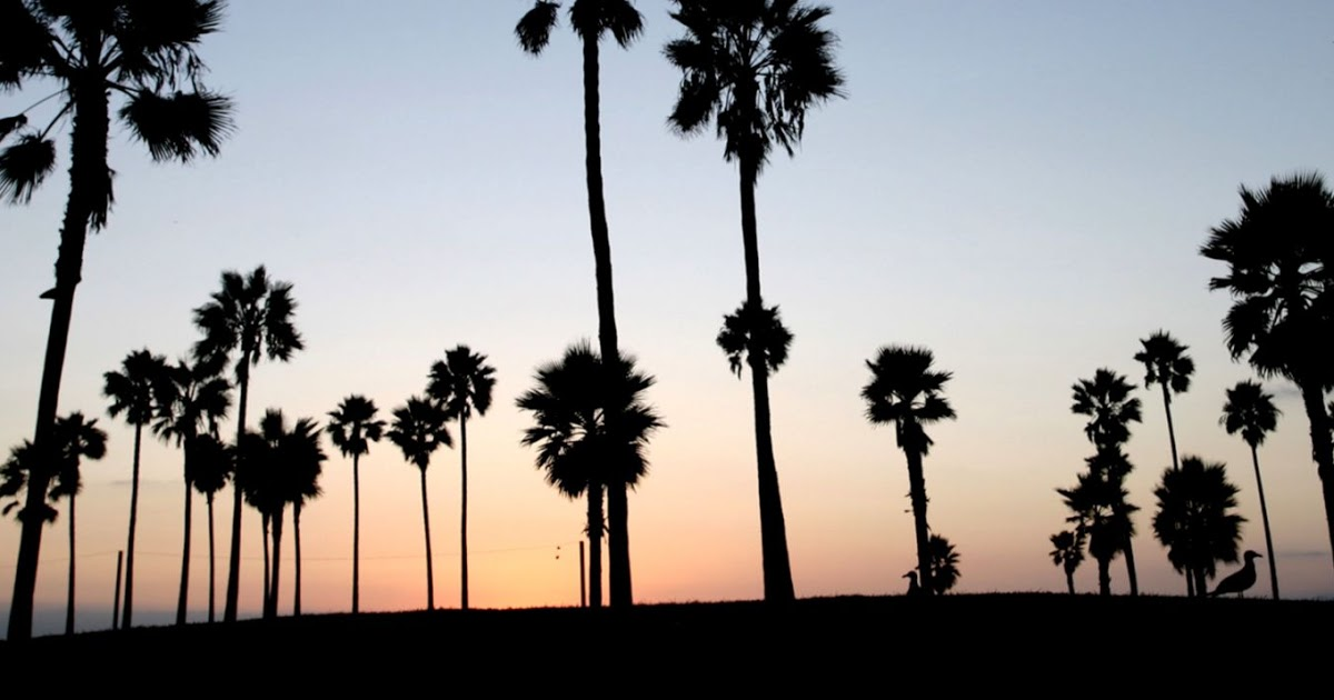 Venice Beach Wallpaper Desktop High Definitions Wallpapers 1200x630