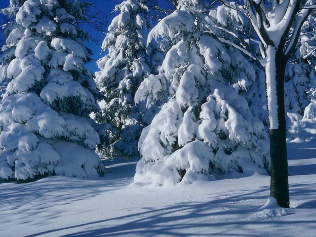 Winter Scene   Christmas Wallpaper 2735685 1024x768