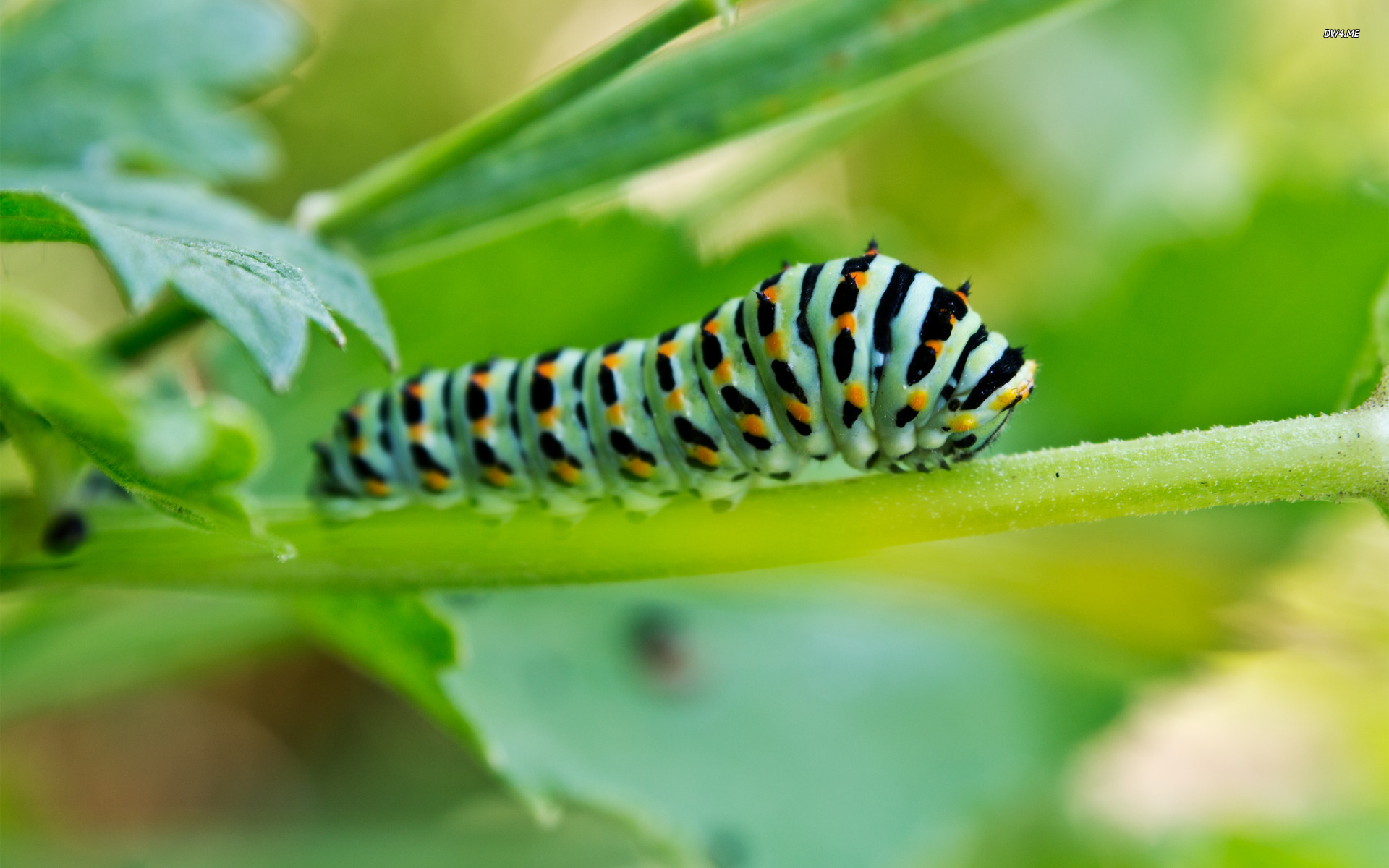 Caterpillar wallpaper   Animal wallpapers   1560 1920x1200