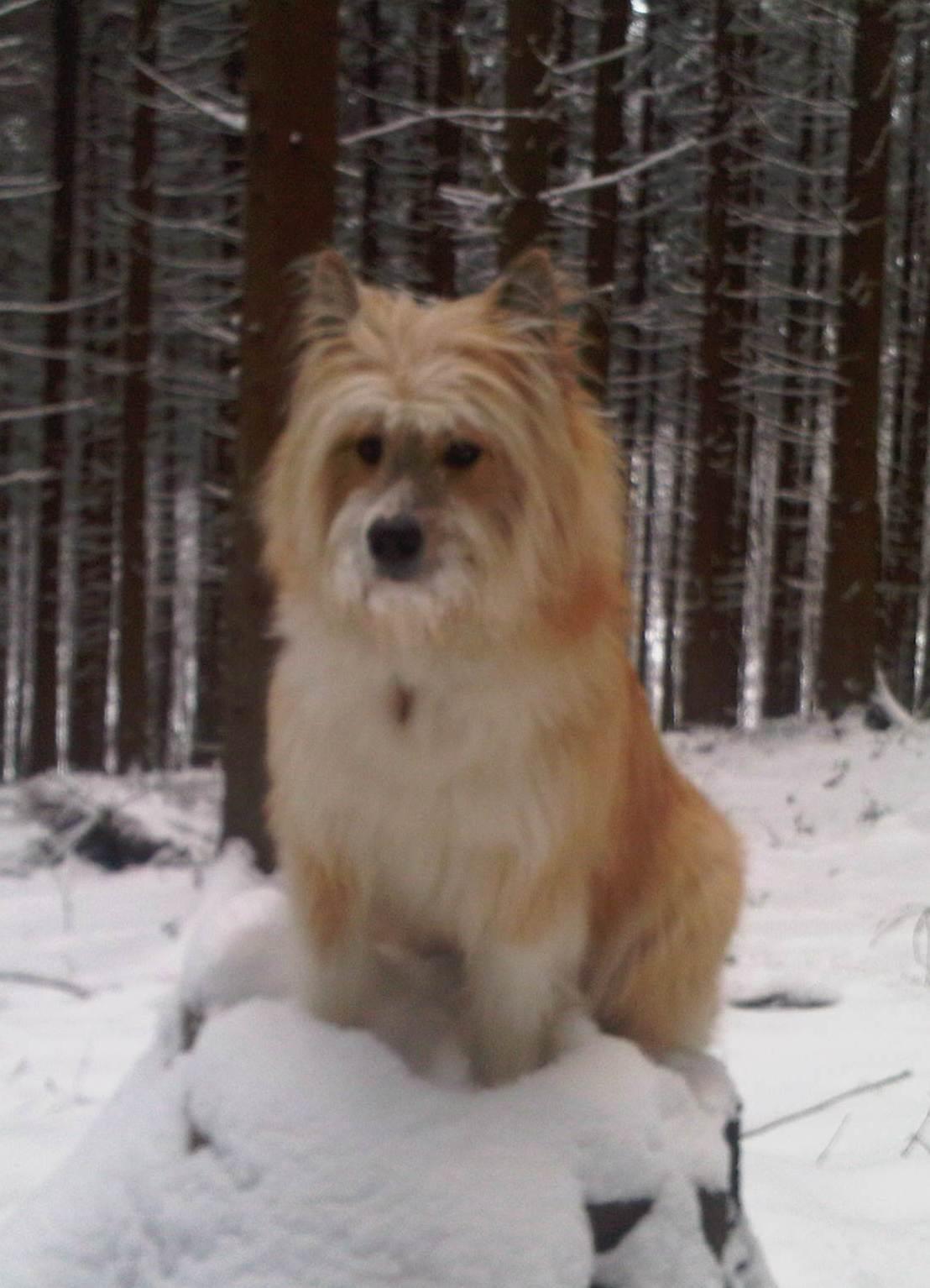 Winter Elo Dog id 96816 BUZZERG 1108x1534