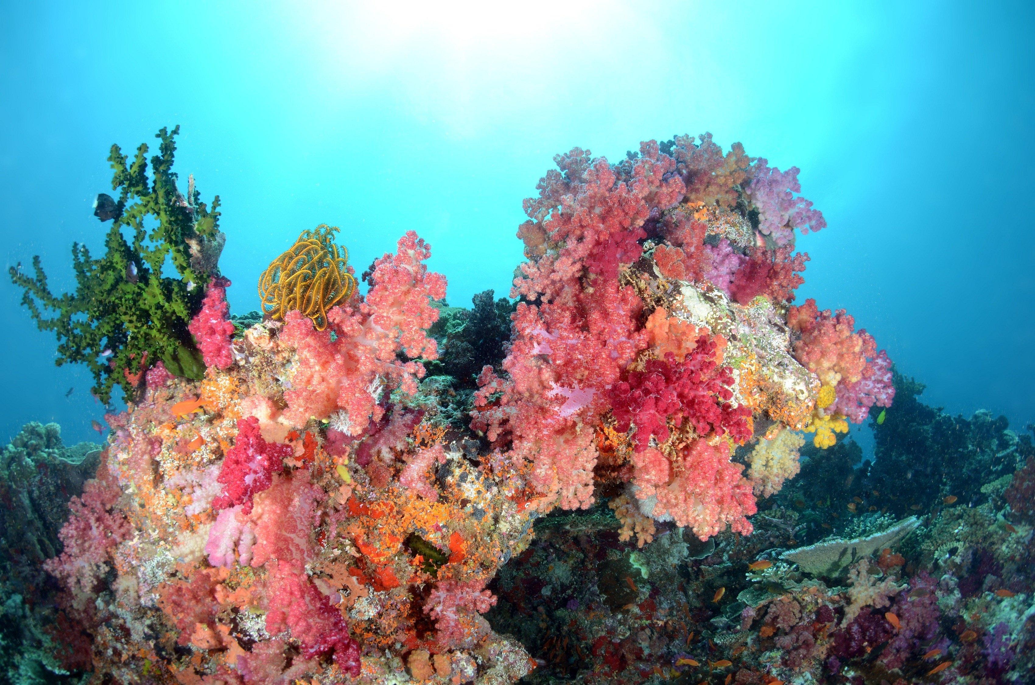 Sea water coral fish fish underwater color ocean wallpaper 3400x2251 3400x2251