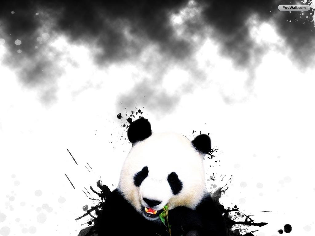 panda bear wallpaper border   wwwhigh definition wallpapercom 1024x768