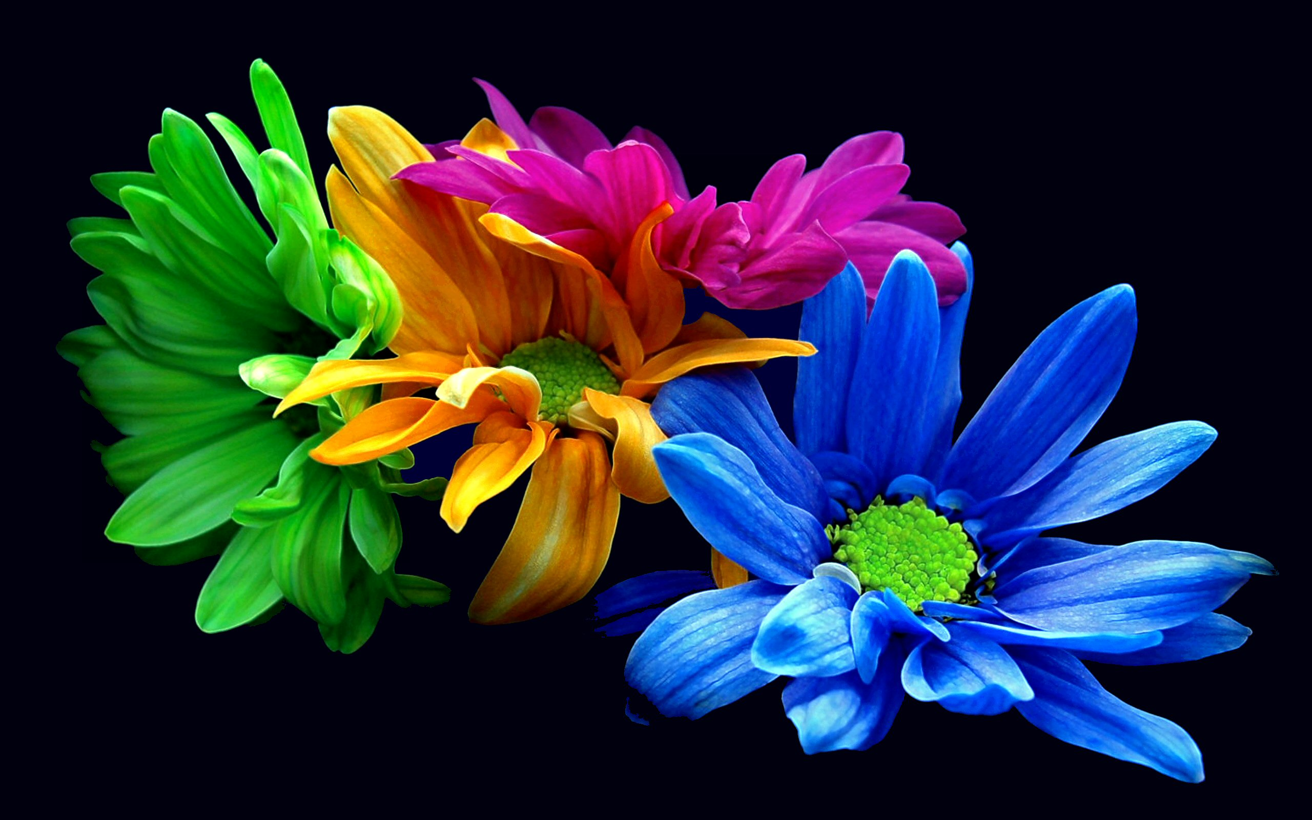 Colorful Flowers Wallpapers HD 2560x1600