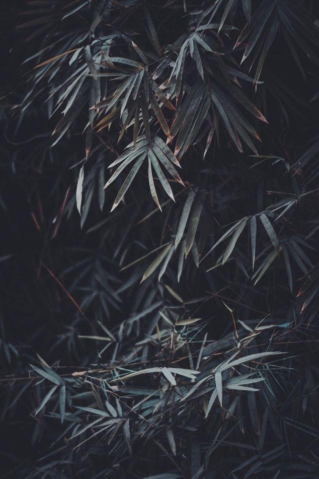 Moody Landscapes   Lightroom Presets Iphone wallpaper night 634x951
