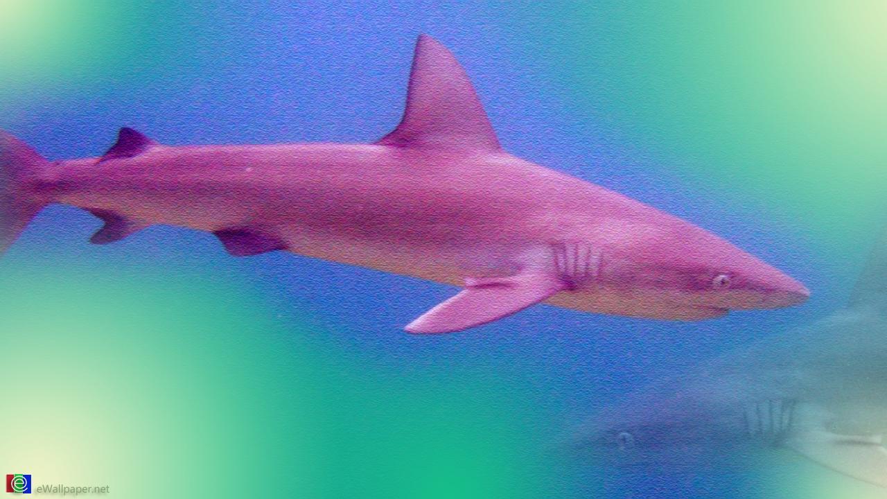 live shark wallpaper - photo #16
