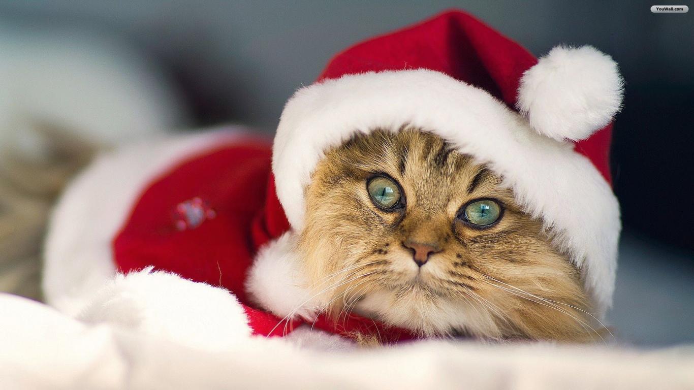 Christmas Cat Wallpaper   wallpaperwallpapersfree wallpaper 1366x768