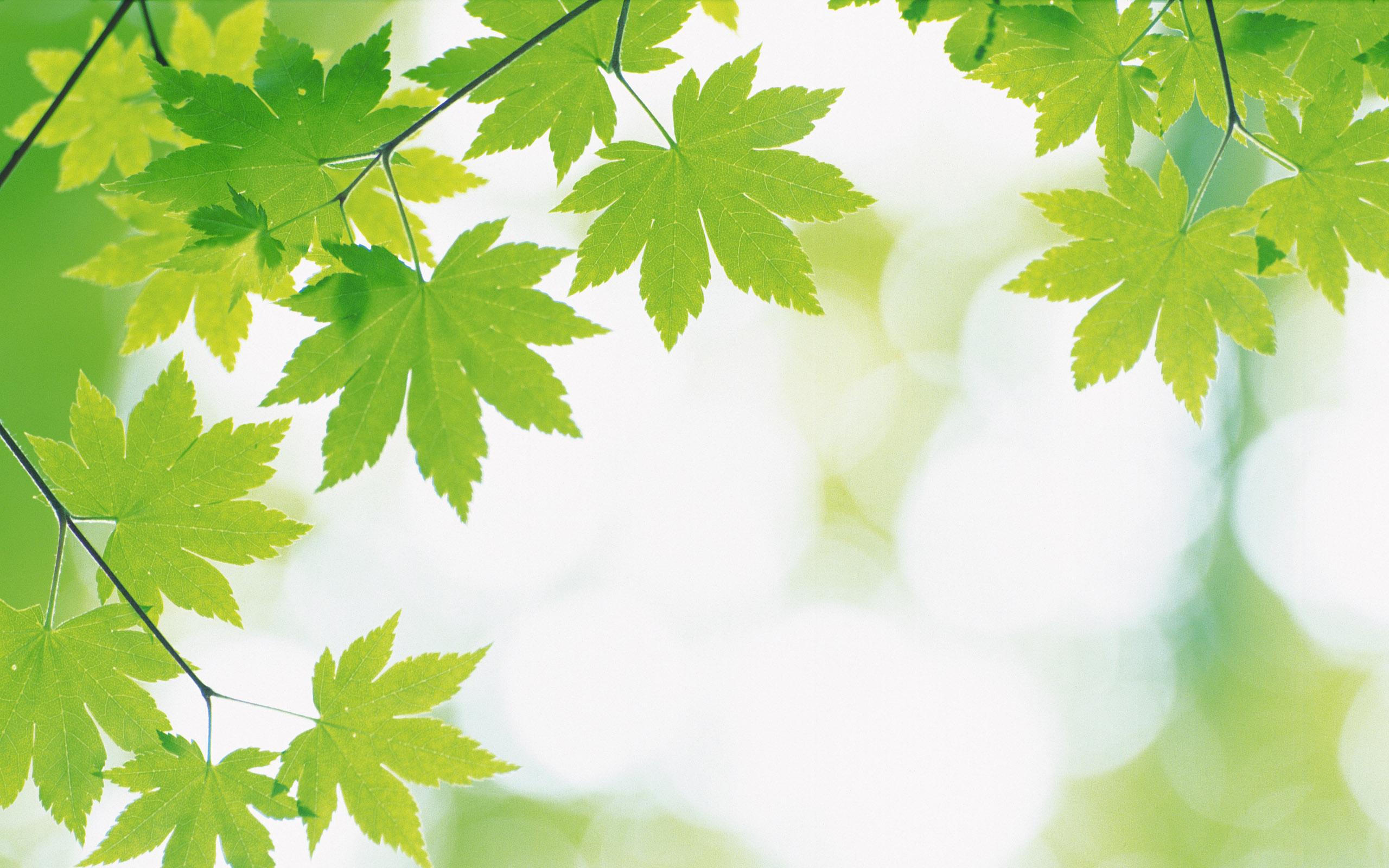 листья зелень фокус  № 1341657 загрузить