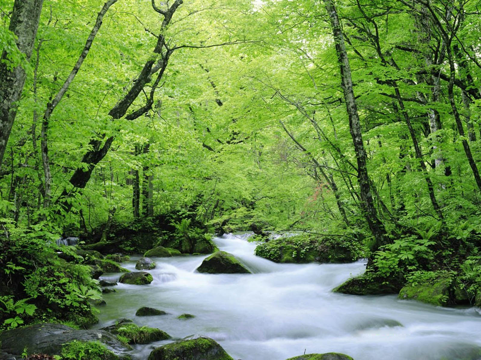 wallpapers Green Nature Wallpapers 1600x1200