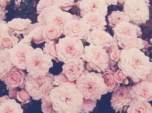 Pretty Backgrounds For Tumblr 500x374
