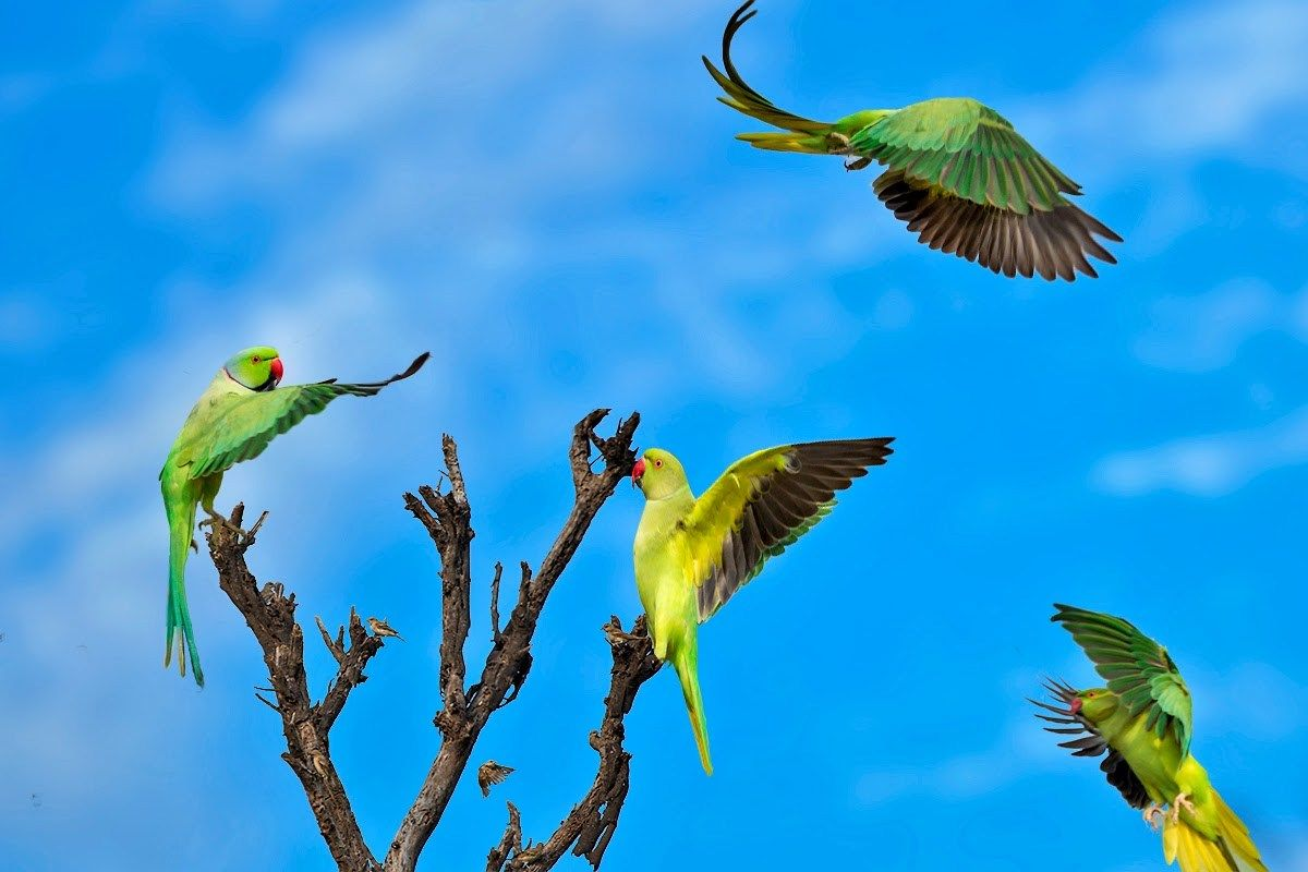3 Parrots On Tree Download HD DesktopMobile Wallpaper and 1200x800