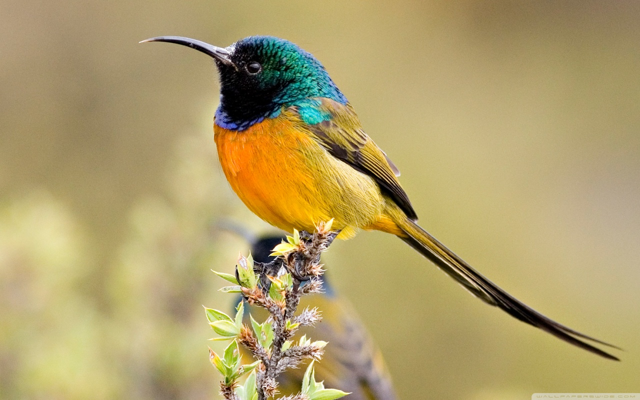 Colorful Birds Wallpapers   First HD Wallpapers 1280x800