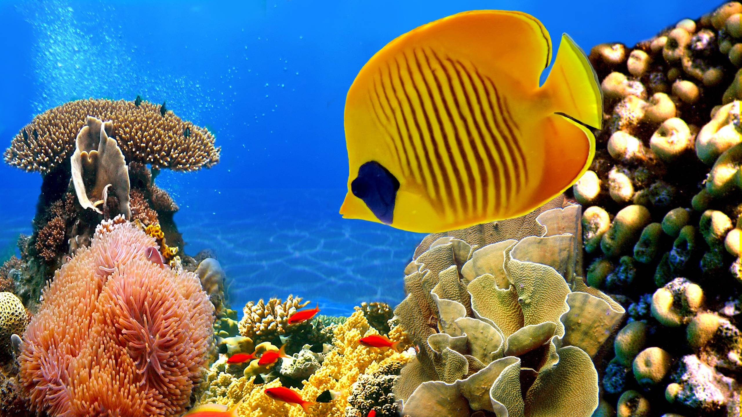 Coral Reef Wallpapers 2560x1440