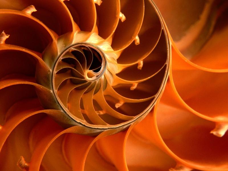 nautilus nautilus seashells 1600x1200 wallpaper Shells Wallpaper 800x600